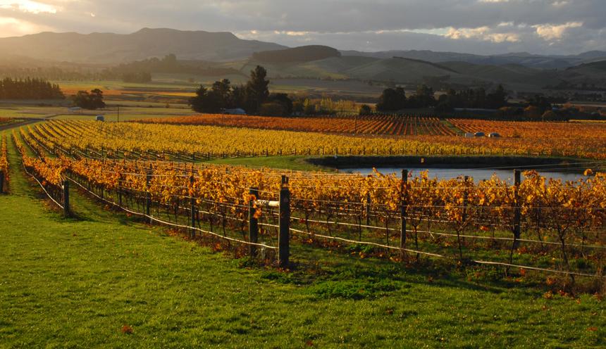 ch-senic-860x496-wine