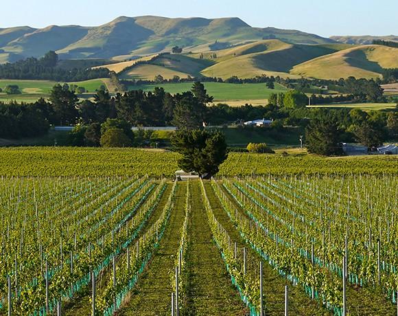 the-grape-vine-580×460